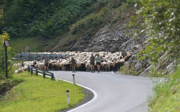 Neutralisierte Streckenführung bei Trans Vorarlberg Triathlon 1