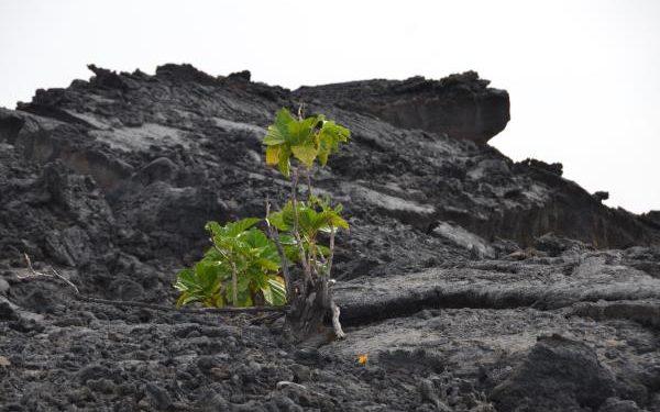 Herren: Die Favoriten des IRONMAN Hawaii 2014 1