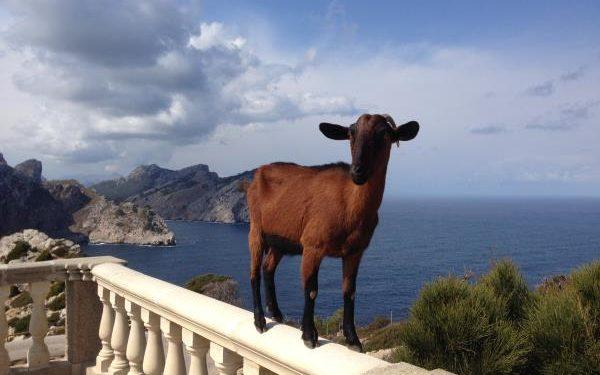 Leiti bloggt: Trainingslager auf Mallorca I 1